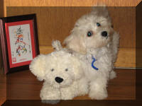 Robins Pups of Florida - Maltipoo